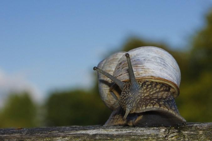 snail-253245