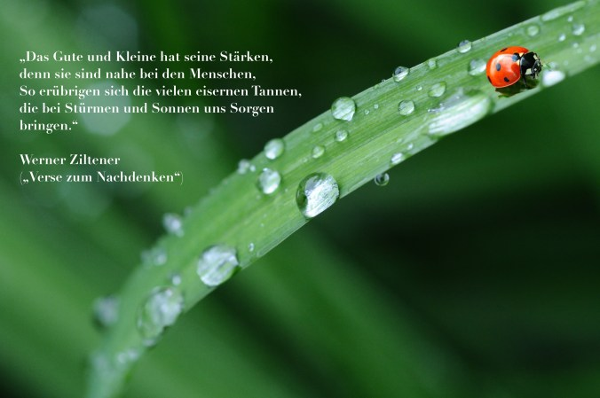 Werner Ziltener_Verse zum Nachdenken_Novum Verlag