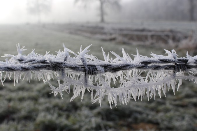 frost-1881723_1920
