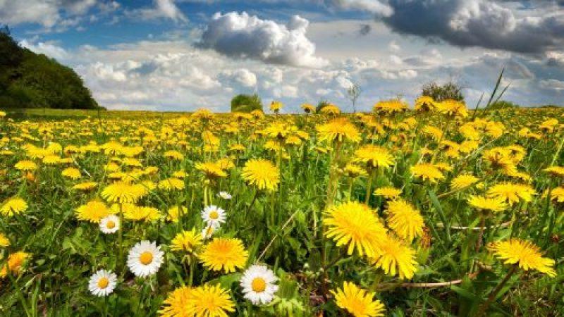 Nature-scenery-field-flowers-spring-sky_1600x900