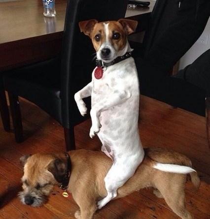 Смешные и странные собачки