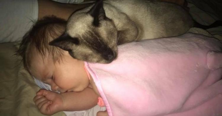 Измучившаяся бездомная кошка не могла доверять людям, но забота о младенце все изменила