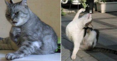 Драматичные коты