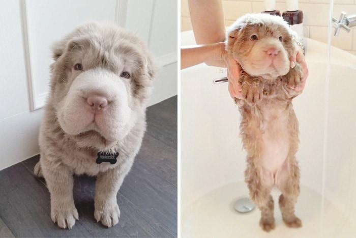 20 собак до и после купания