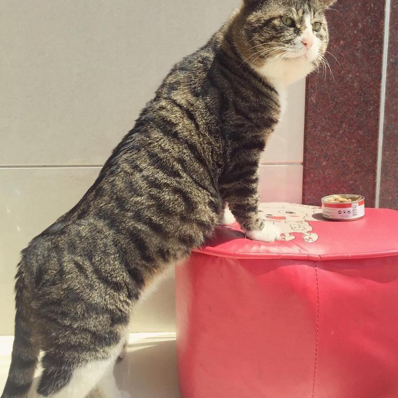 В Сети появился самый нефотогеничный кот, которого моментально разобрали на мемы😁