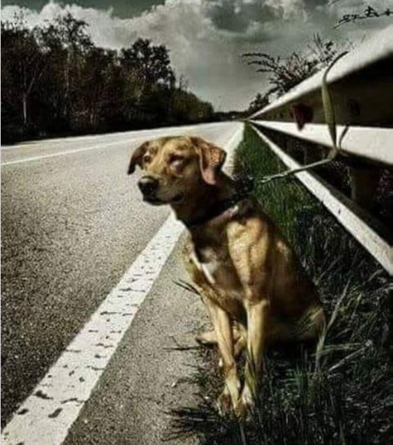 Хозяин просто привязал пса к отбойнику и уехал
