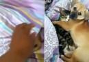 Обнимашки с щенком