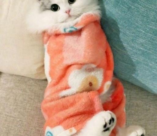 Котики в одеяле