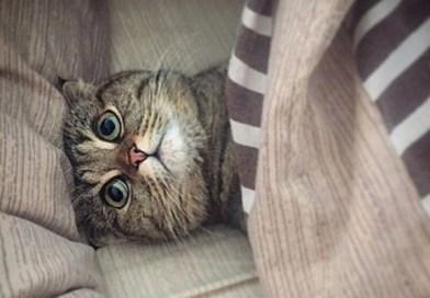 Очаровательные котики для отличного настроения