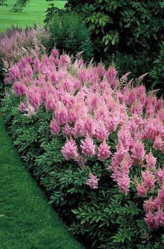 шикарные цветочные идеи для сада и дачи