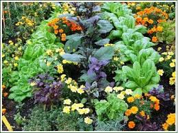 This container garden proves good enough to eat.