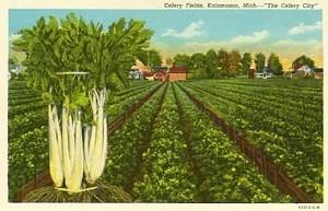 Celeryfield