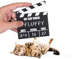 My Cat Video