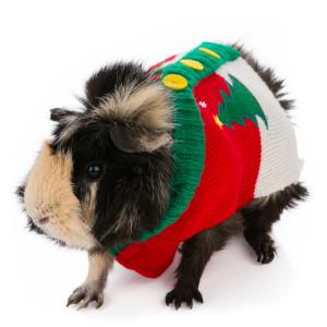 ugly sweater small animal petsmart