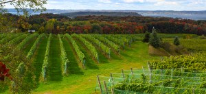 Leelanau_Wineries_RESIZED
