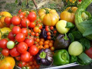 garden_bounty-251211432_std