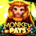 สล็อต Monkey Pays SW slot