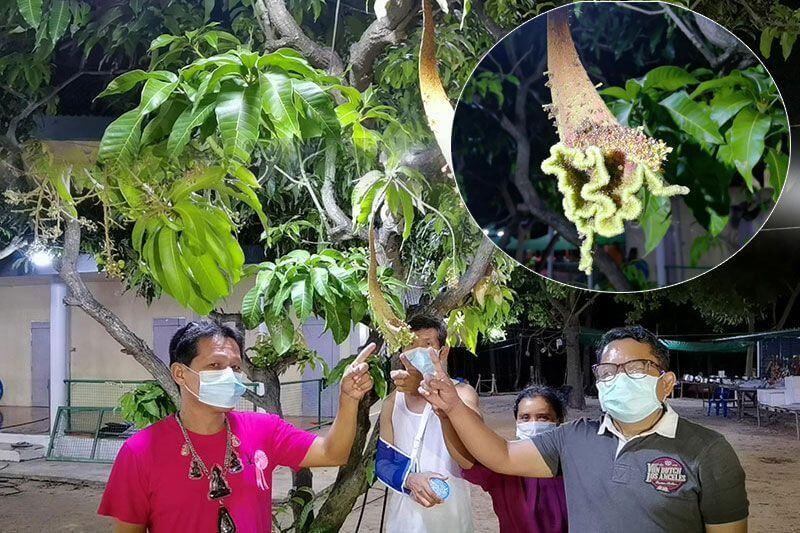 เลขเด่น งวดนี้ 02-05-64 Nowbet Asia เว็บหวย ระดับเอเชีย ต้นมะม่วงดอกประหลาด 560 95 60