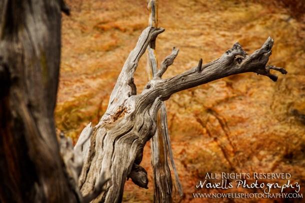 yellowstone-3_034