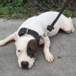 Wrong Approach to Pit Bull Confiscations