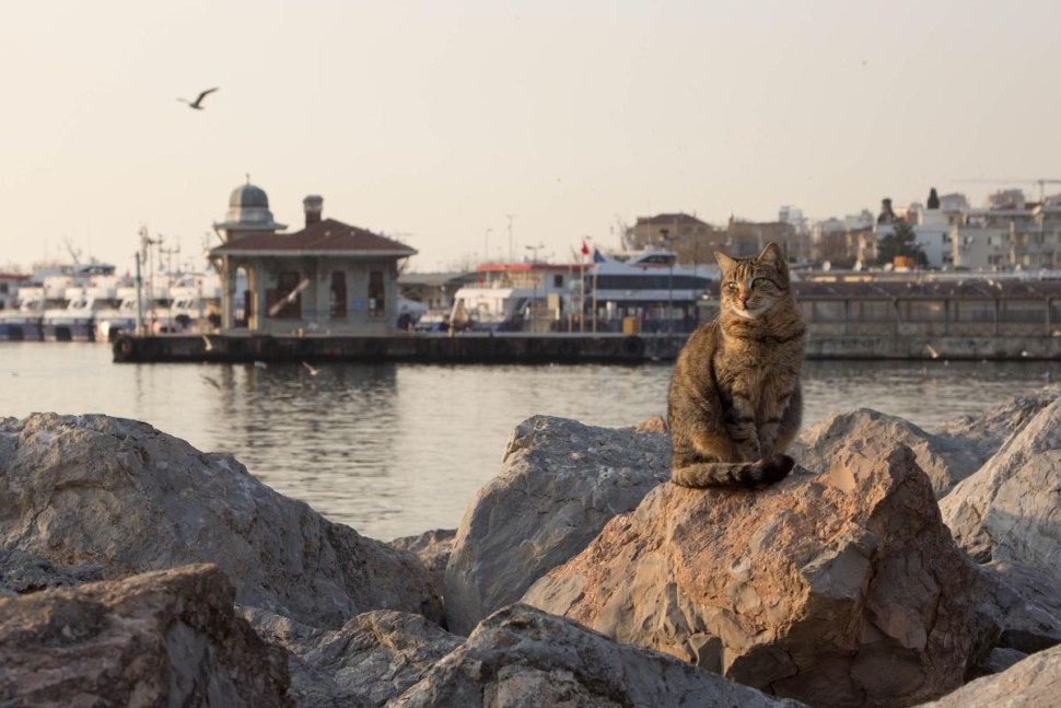 Bostanci, Istanbul