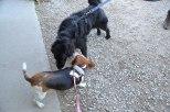 Ruby made a friend :)