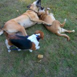 Ruby even took her chance to wrestle with Sam and Sadie!