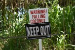 Watch out for coconuts!