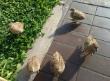 I met some birds outside our timeshare unit