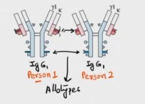 Image result for isotype antigenic determinants