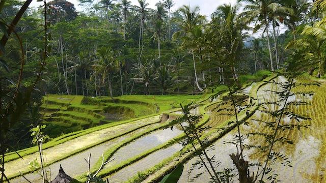 Indonesie 9 aout - Tampaksiring (Gunung Kawi) (14)