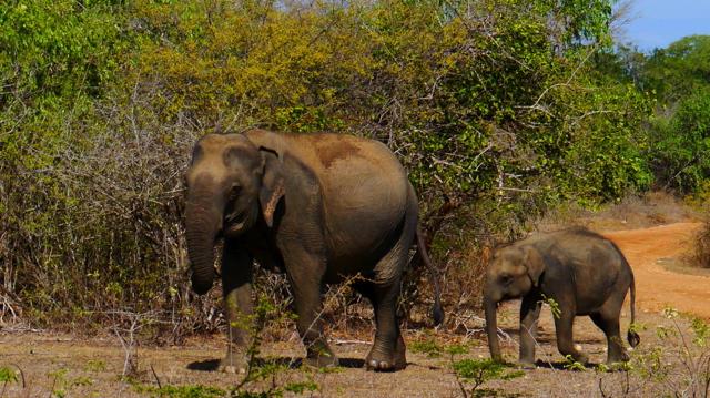 Un safari au Sri Lanka
