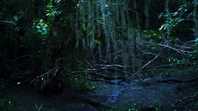 Everglades Floride-10