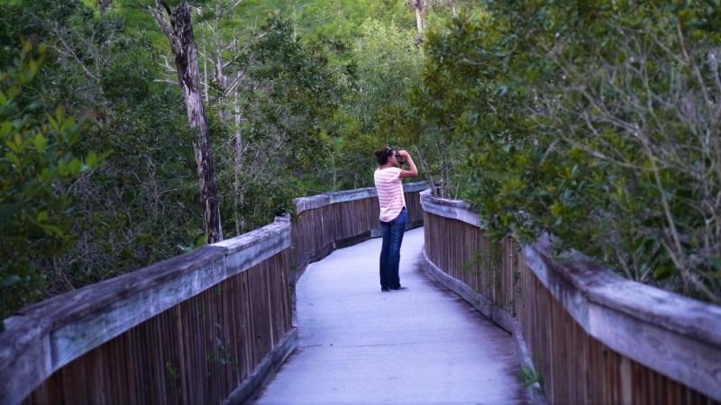 Everglades Floride-8