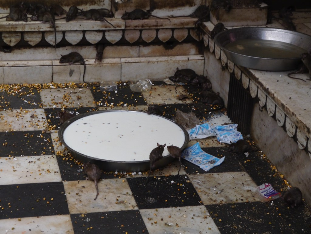 Marcher pieds nus dans le Temple des Rats à Deshnoke: je l'ai fait, vous pouvez le faire aussi, lol!
