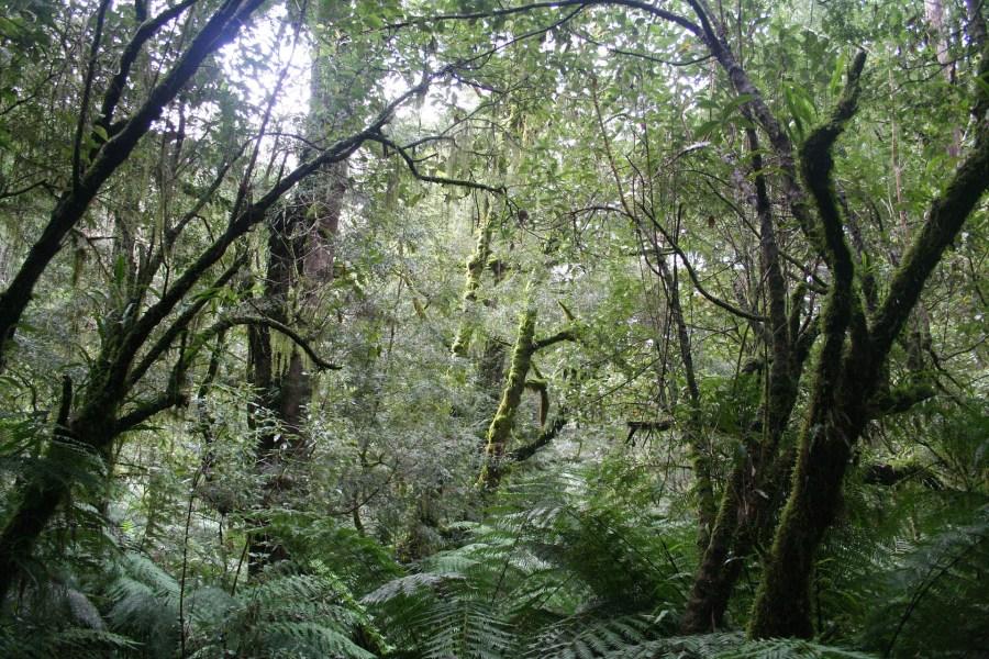 jungle-678503_1920