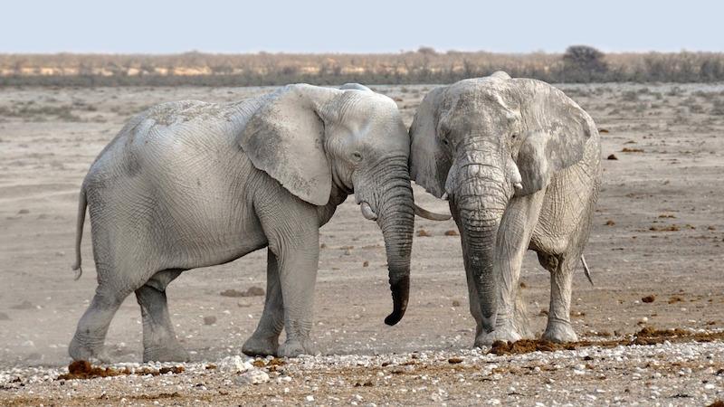 elephant-1170110_1280