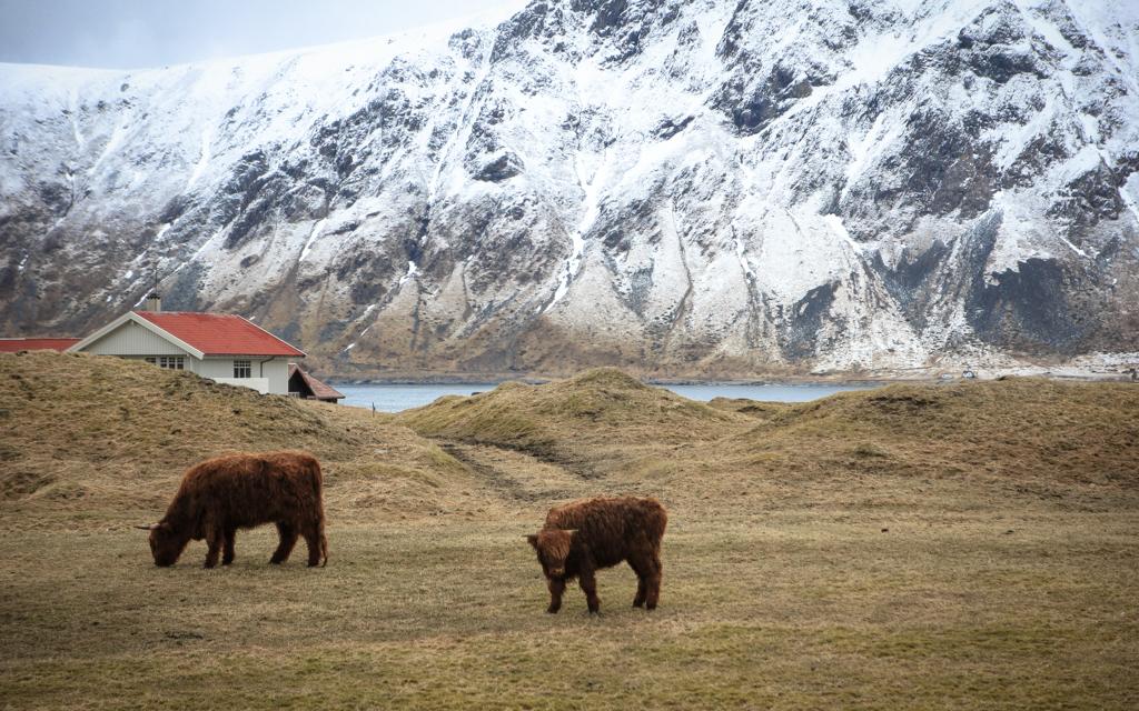 voyager-en-norvege-avec-un-bebe-15