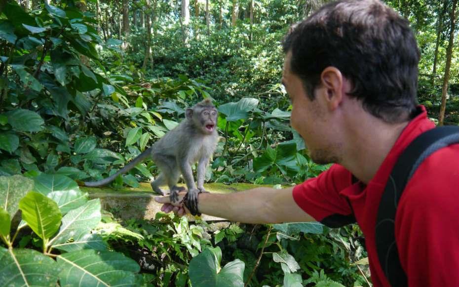 visiter la monkey forest à Ubud