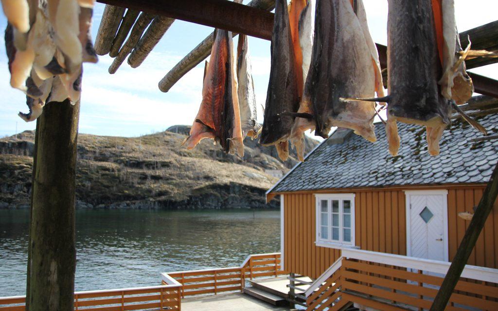 Voyager en Norvège avec un bébé et loger dans une cabane de pêcheur