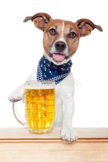 Beer Terrier NMR