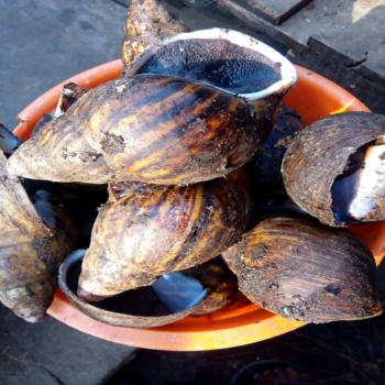 Image of premium quality farm fresh Snail on Now Now Express for sending Grocery to Nigeria
