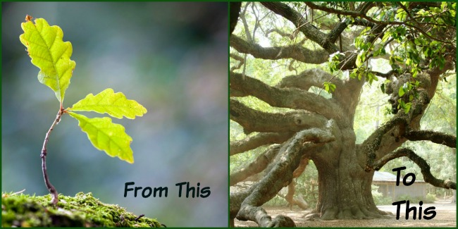 Marriage starts as a sapling and become a full grown tree.