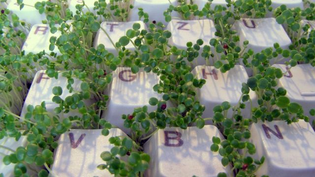 greenery growing up through the keys of a typewriter
