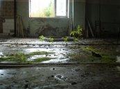 tchernobyl-pripyat-nature-4