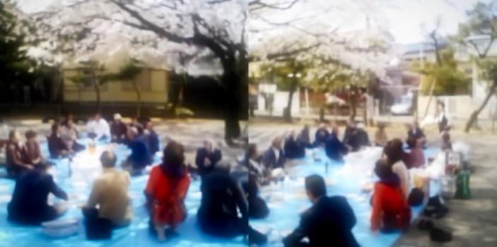 桜満開!春爛漫!