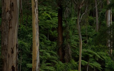 Major threat to old-growth forests removed