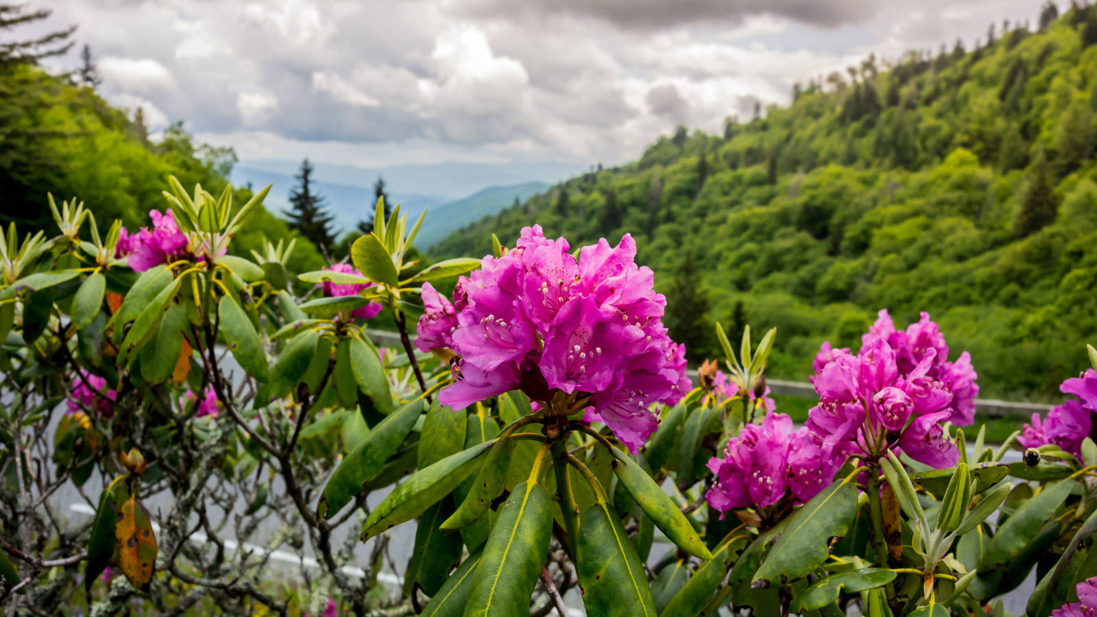 Fall In The Smokies Wallpaper Dreaming Of Spring 9 Great Spots To See Wildflowers