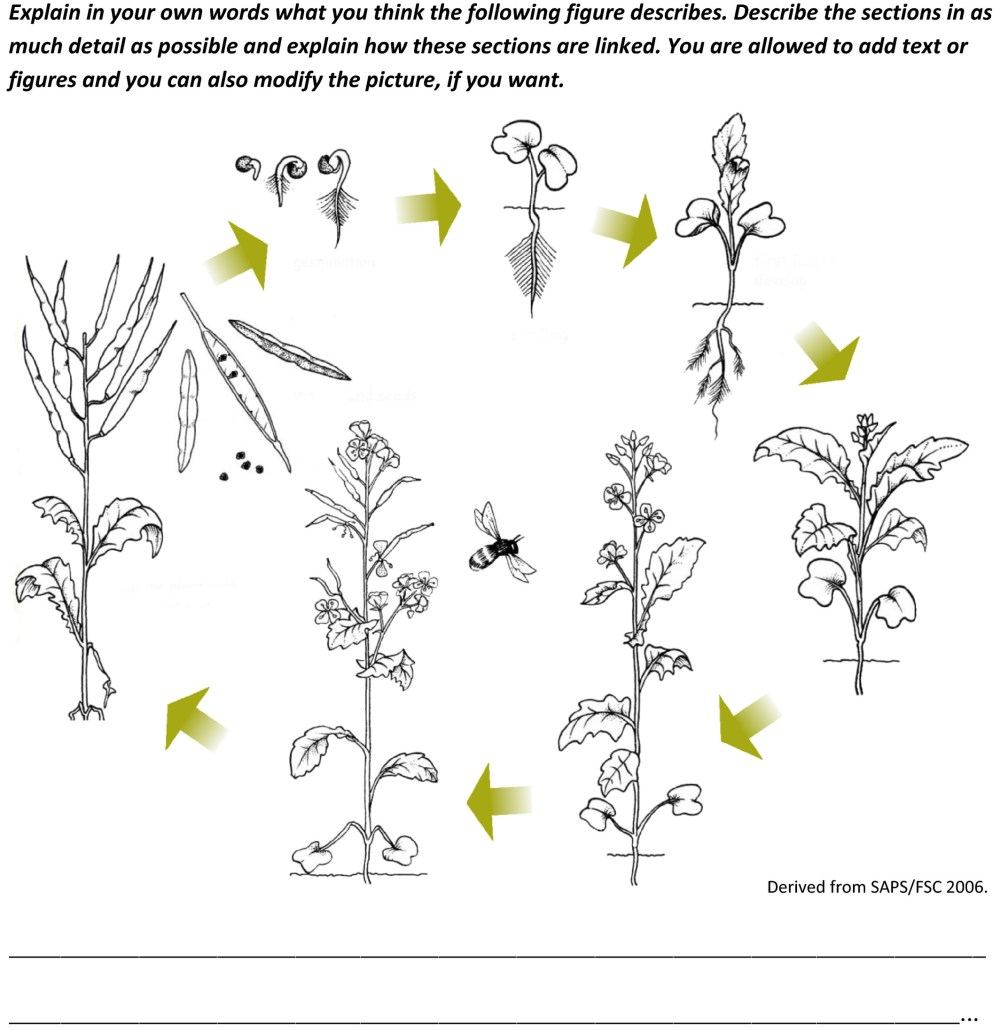 medium resolution of Understanding students' conceptions of plant reproduction to better teach  plant biology in schools - Lampert - 2019 - PLANTS
