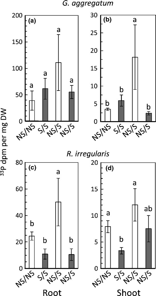 Fungal nutrient allocation in common mycorrhizal networks